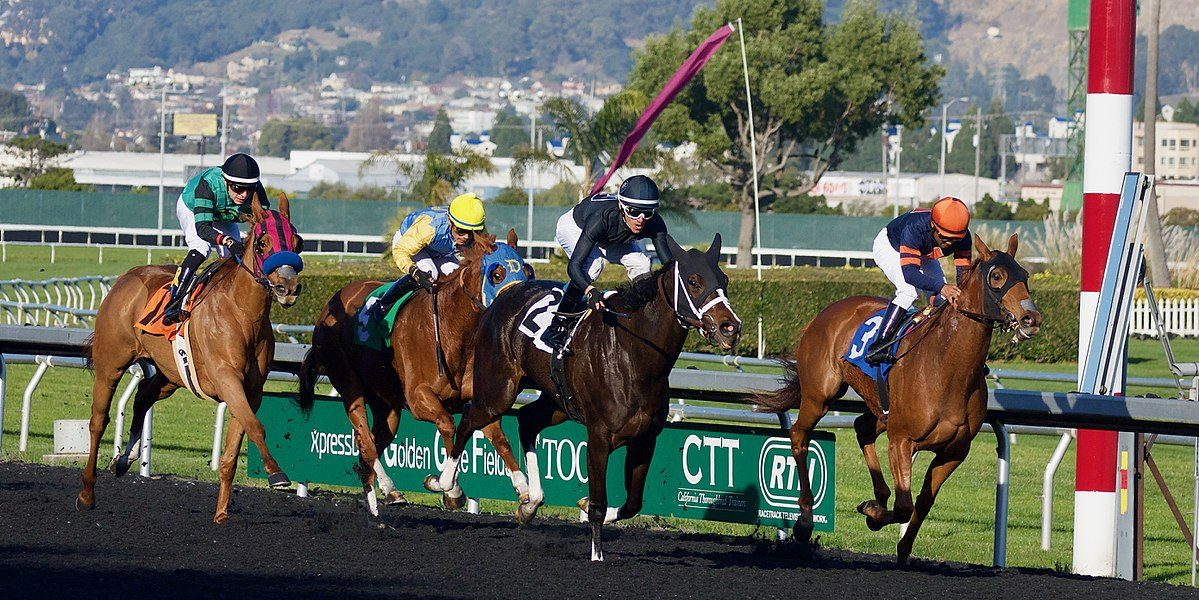 How To Choose Successful Horse at The Racetrack