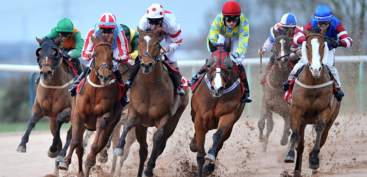 Warfare Horse Earns a Agency Floor in The Viewers's Coronary heart For Horse Racing